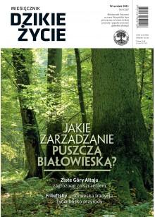 Dzikie Życie 2011, nr 9 (207), wrzesień