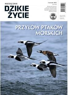 Dzikie Życie 2013, nr 6 (228), czerwiec