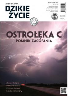 Dzikie Życie 2018, nr 10 (292) październik